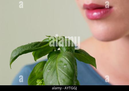 Young woman holding fresh basil - Stock Photo