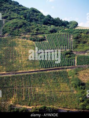 Weinberg am Mittelrhein in Rheinland-Pfalz - Stock Photo