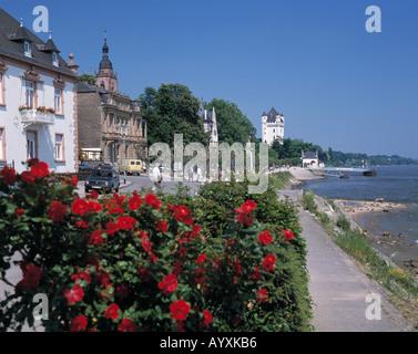 Rheinuferpromenade, Pfarrkirche, Kurfuerstliche Burg, Eltville, Rhein, Rheingau, Hessen - Stock Photo
