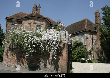White roses on the wall of a large house in the chilterns village of Little Missenden - Stock Photo