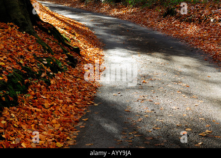 autumn leaves on country lane, norfolk - Stock Photo