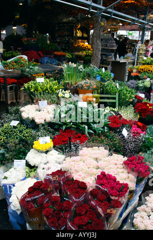 flowers for sale in the bloemenmarkt last of the citys floating markets singel amsterdam netherlands north holland - Stock Photo