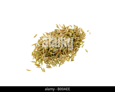 Fresh Dried Fennel Seeds Cooking Ingredient Spices Isolated Against A White Background With A Clipping Path And - Stock Photo
