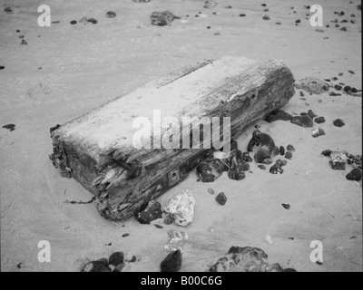 Large piece of driftwood with a cover of snow. Washed up on a sandy beach surrounded by sand black pebbles and rocks. - Stock Photo