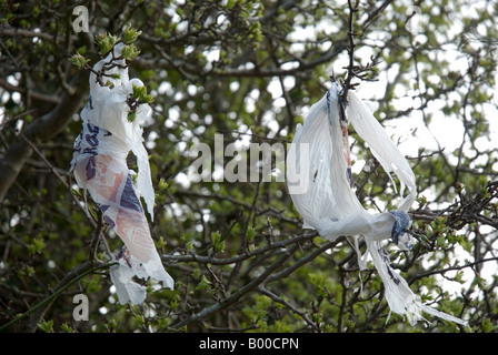 Supermarket carrier bag caught in a tree - Stock Photo