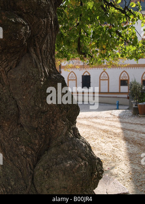 400 year old Linden Tree, Historic Square, Salzburg Fortress (Festung Hohensalzburg) - Stock Photo