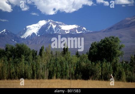Mt. Mercedario and poplar trees, near Barreal, Calingasta Valley, San Juan province, Argentina - Stock Photo
