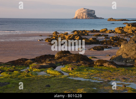 Bass Rock in the Firth of Forth, Scotland - Stock Photo