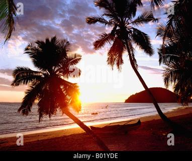 Tropical beach with Coconut Palm Madagascar Cocos nucifera Africa Arecaceae Madagascar beach geography landscapes - Stock Photo