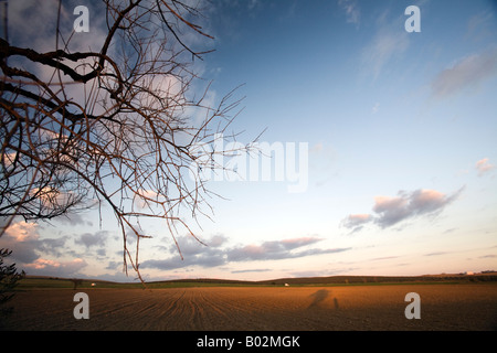 Bare tree and plowed field in the late evening, rural area in the province of Seville, Spain - Stock Photo