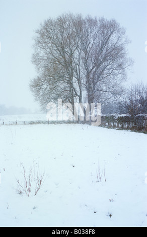 Snow-covered field with Common sorrel poking through with White willow tree and Hawthorn hedge visible through falling - Stock Photo