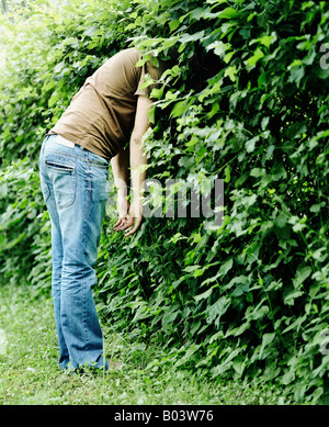 Side profile of a man hiding his head in the hedge - Stock Photo