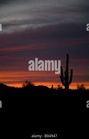 Palo Verde Arizona A saguaro cactus is silhouetted against the sunset in the Sonoran Desert - Stock Photo