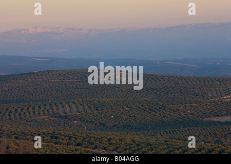 Olive Groves and scenery of the Parque Natural de la Sierra Magina, during sunset seen from a mirador in the town - Stock Photo