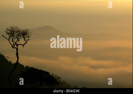 Misty rainforest at sunrise seen from Cerro Pirre in Darien national park, Darien province, Republic of Panama. - Stock Photo