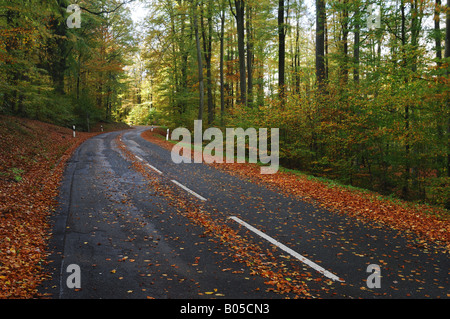 road in autumn coloured beech forest, Germany, Bavaria, Spessart - Stock Photo