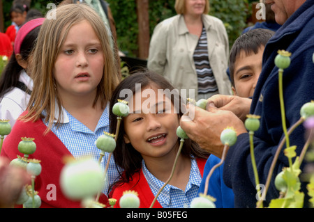 Children from local schools visit local allotments and enjoy gardening harvesting cooking and eating the produce - Stock Photo