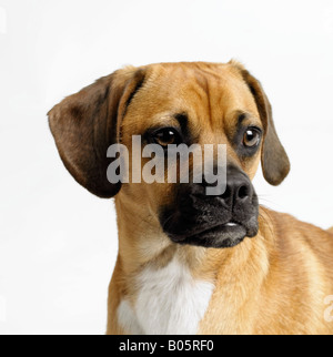Close up of dog's face - Stock Photo