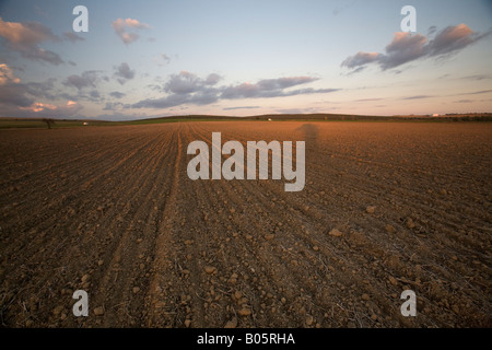 plowed field in the late evening, rural area in the province of Seville, Spain - Stock Photo