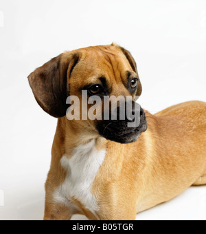 Potrait of a dog - Stock Photo