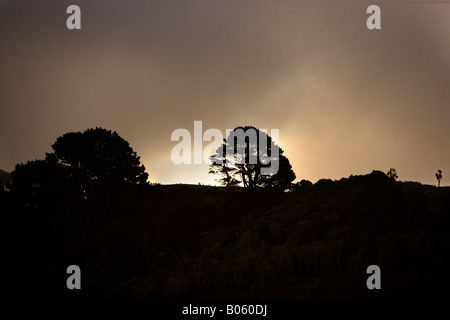 Skyline of trees sillouetted at sunset on the shore of Goat Island marine reserve, Leigh, North Island, New Zealand - Stock Photo