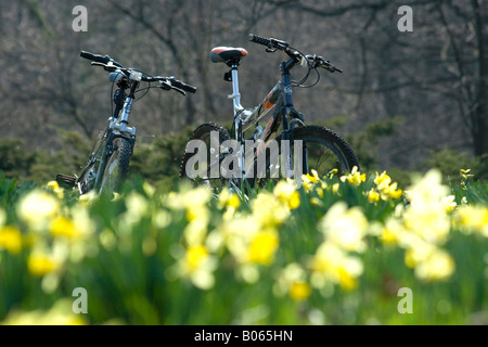 Two bicycles on the meadow full of yellow jonquils in Morton Arboretum - Stock Photo