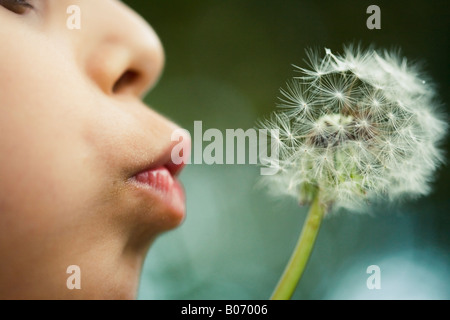 Boy aged six blows dandelion seed head close up - Stock Photo