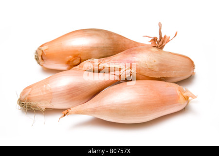 French Echalion onions isolated on a white studio background. - Stock Photo
