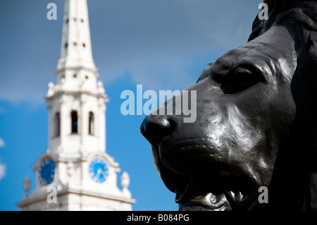 a bronze lion statue at Trafalgar Square and St Martin in the Fields in London - Stock Photo
