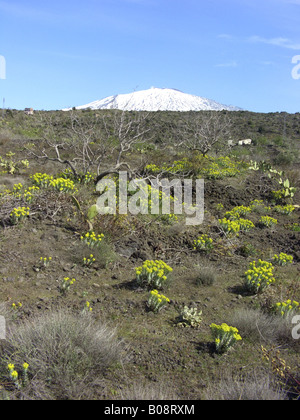 adaptations of native angiosperms This feature is not available right now please try again later.