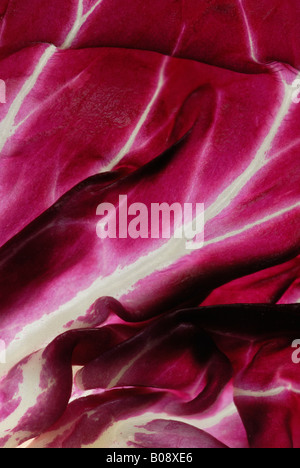 Detai, Radicchio or Italian Cicory (Cichorium intybus var. foliosum) - Stock Photo