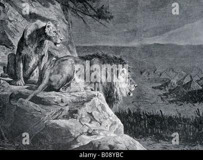 'Ein Loewenpaar auf der Lauer, ' woodcut depicting 'A Pair of Lions on the Prowl' from 'Moderne Kunst in Meisterholzschnitten' - Stock Photo