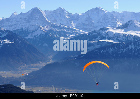 Paraglider in front of the Eiger Chain, Mt. Moench and Jungfrau, Bernese Oberland, Highlands, Mt. Niederhorn, Swiss - Stock Photo