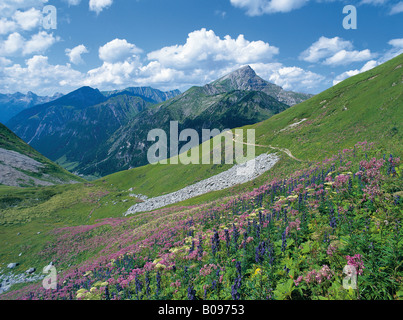 Flower meadow at the Hantenjoch, Lechtal Alps, North Tyrol, Austria, Europe - Stock Photo