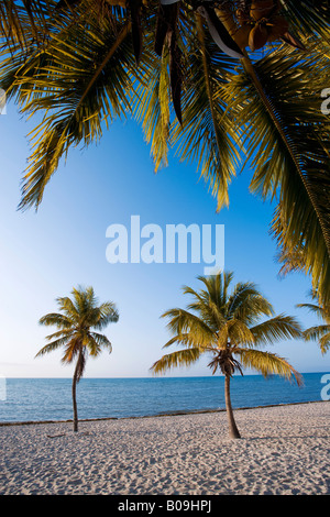 Tropical beach and palm trees in Key West, Florida, USA - Stock Photo