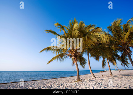 Tropical beach with palm trees in Key West, Florida, USA - Stock Photo