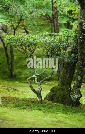 Young tree growing in forest - Stock Photo