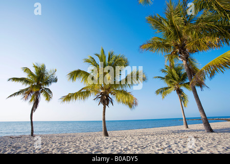 Palm trees on tropical beach in Key West, Florida, USA - Stock Photo