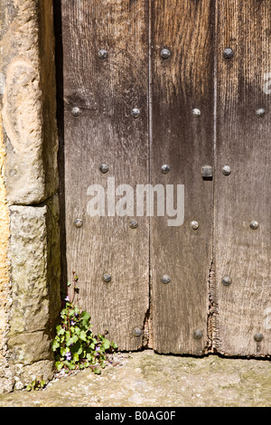 A small plant growing in the corner of a doorway - Stock Photo