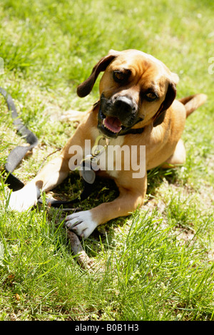 Dog laying on grass - Stock Photo