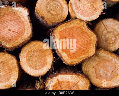 Close up view of freshly sawn pine logs showing the annual rings - Stock Photo