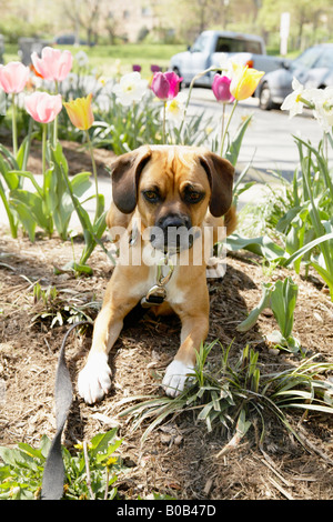 Dog with flowers - Stock Photo