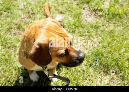 Looking down on dog - Stock Photo