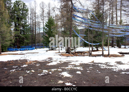 sacred trees near Tuvkhen Monastery, Mongolia - Stock Photo