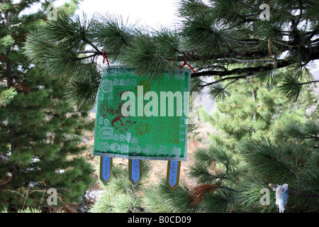 sacred tree in Tuvkhen monastery, Mongolia - Stock Photo