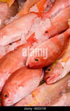 Fresh Red Snapper fish - Huachinango in Spanish - packed in ice for sale in market stall in Puebla, Mexico. - Stock Photo