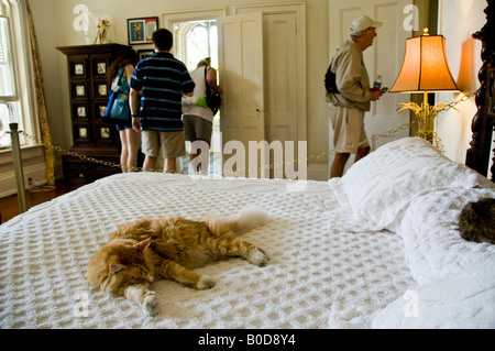 Cat sleeping on a bed in the master bedroom in the Ernest Hemingway Home in Key West not caring about tourists walking - Stock Photo