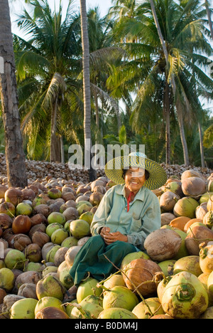 A rural Thai woman sits and smiles stop a harvest of coconuts - Stock Photo