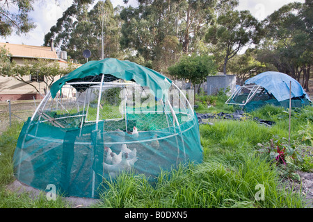 A chicken coop, vegetable patch and pond in an organic, self-sustaining and ecologically friendly permaculture plot. - Stock Photo