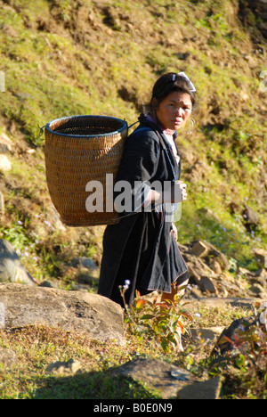 black hmong women carrying shoulder basket going to gather pig feed - Stock Photo